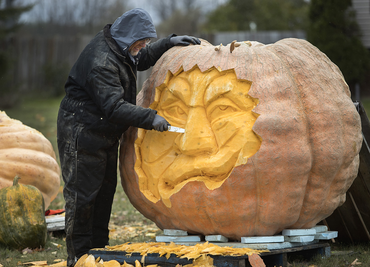 giant pumpkin being carved