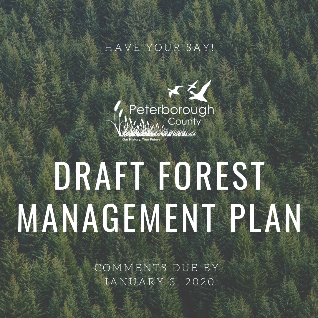 Draft Forest Management Plan