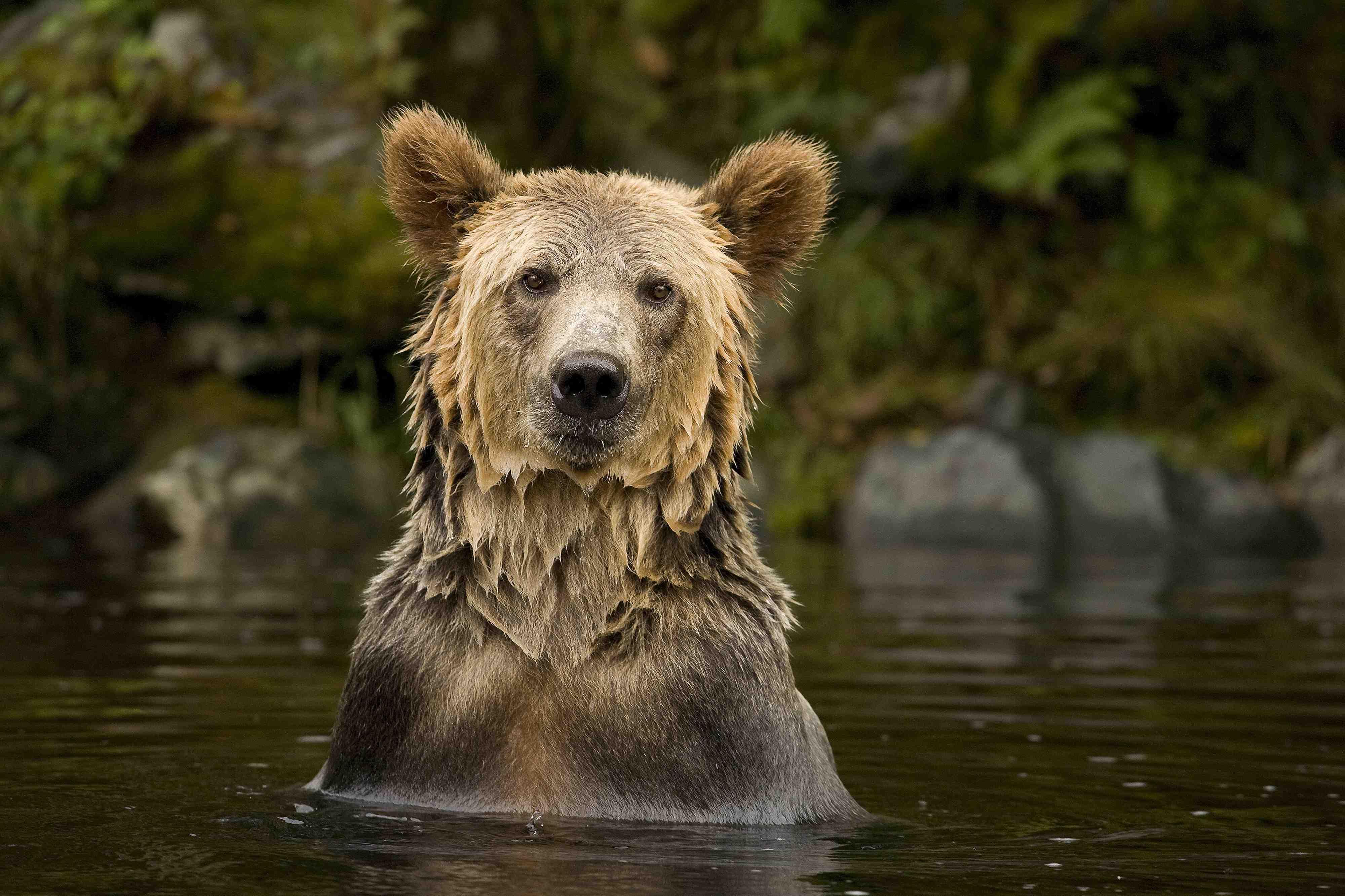 Wildlife Photography Exhibit