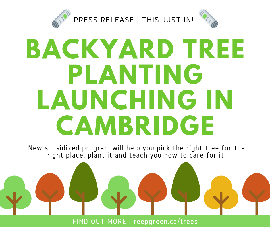 Press Release Graphic - tree planting in cambridge