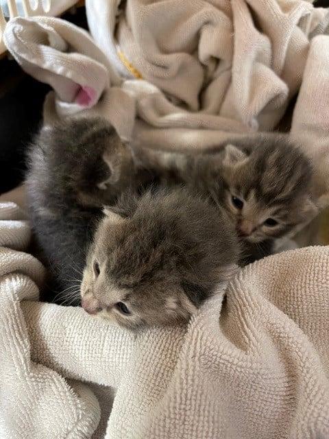 2021-2641 kittens