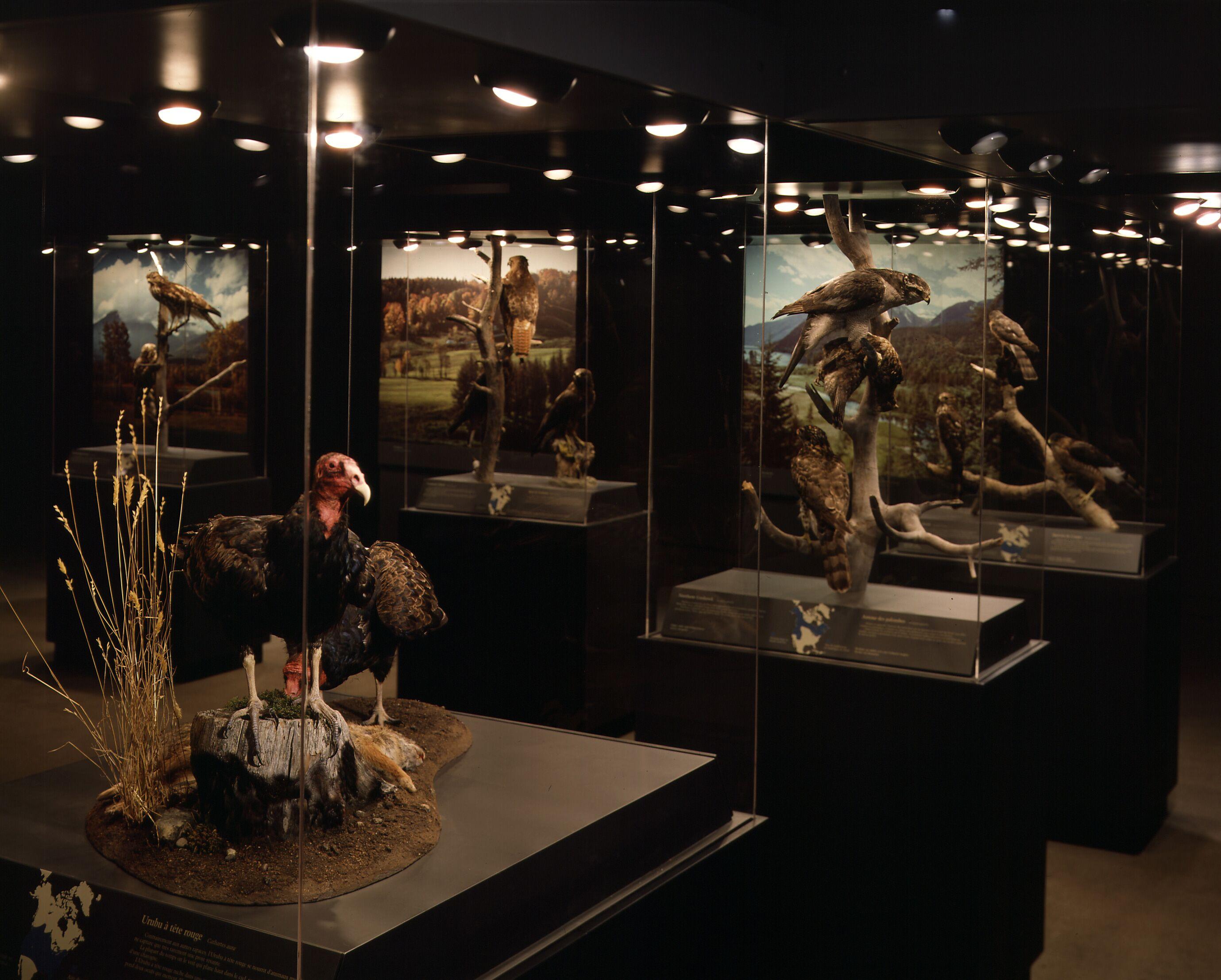 Birds of Prey exhibit