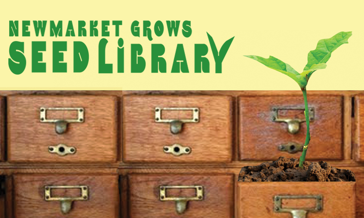 seedling growing out of a card catalogue drawer in the newmarket grows seed library