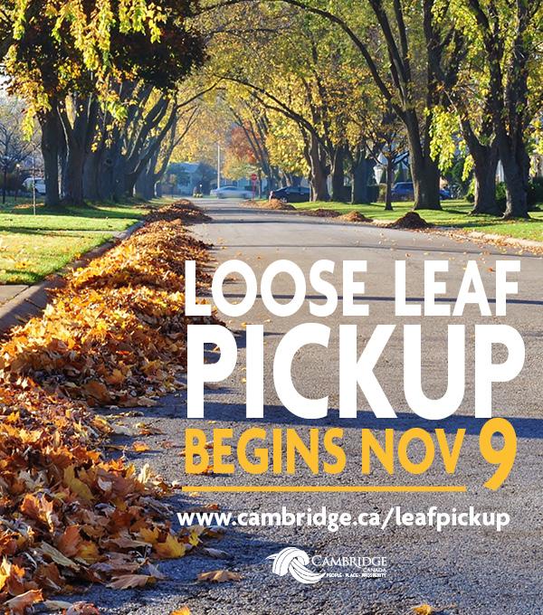 Loose Leaf Pickup