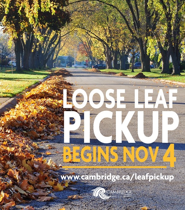 Loose Leaf pickup starts Nov. 4